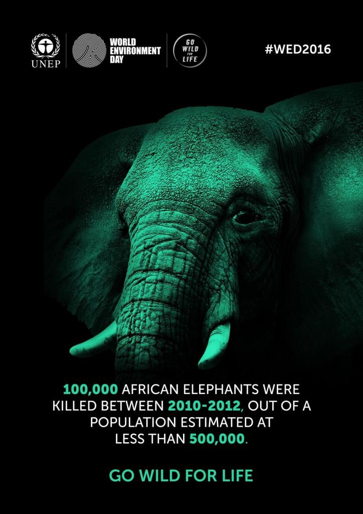 46 Elephant